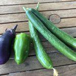 夏野菜収穫!