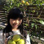 レモン収穫🍋